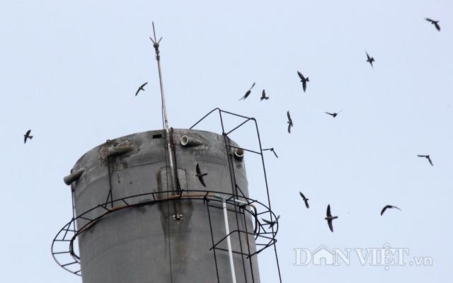 Người nuôi yến tại Bình Thuận và các tỉnh lân cận rất bất bình khi số lượng chim yến ngày càng giảm sút