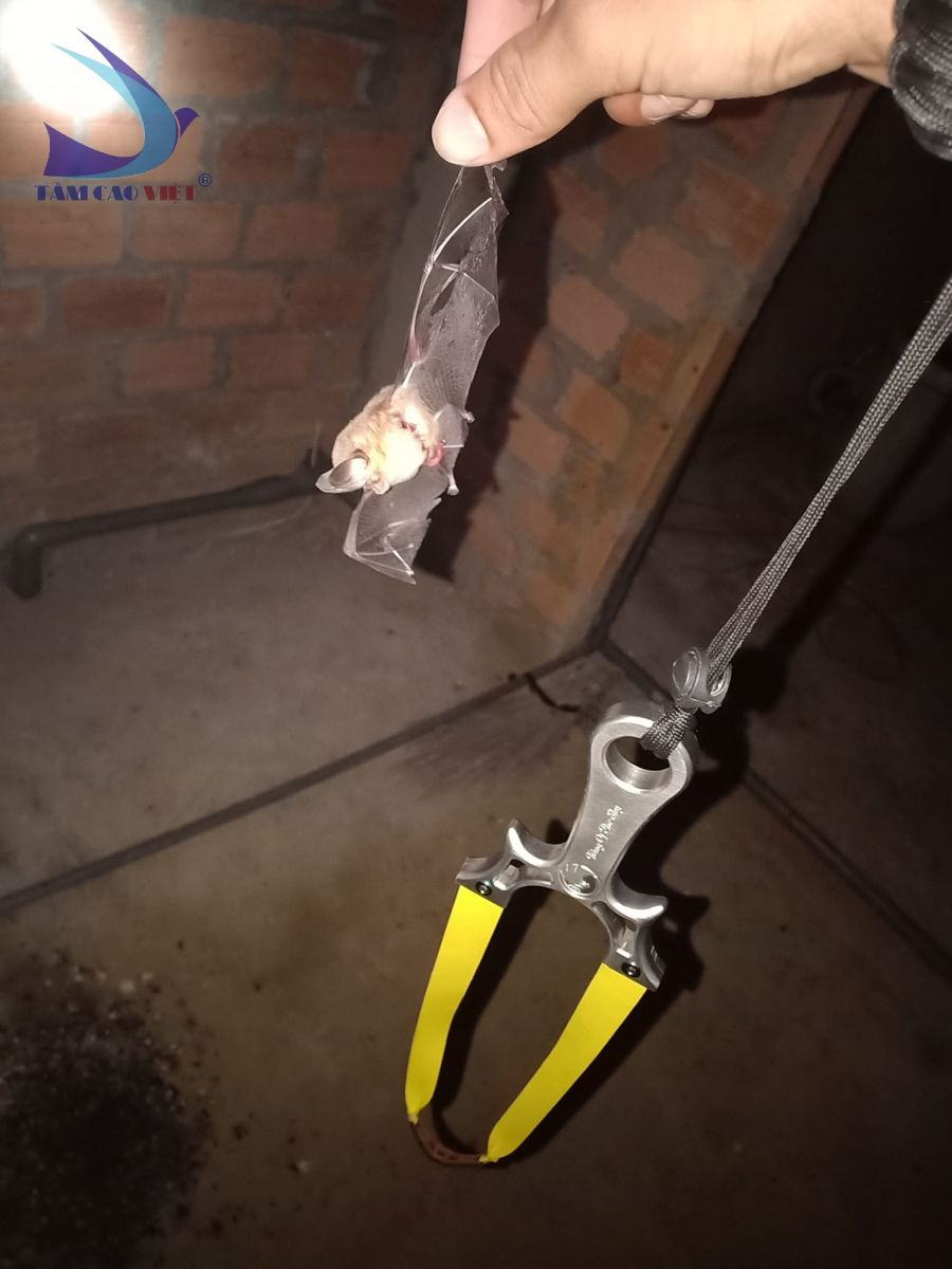 Hình ảnh bắt dơi từ kỹ thuật viên khi đi bảo trì nhà yến