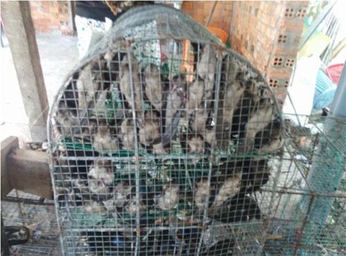 Chim yến bị bắt để phóng sinh và làm thịt